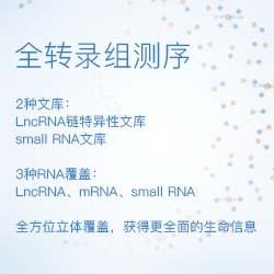 【Seqmore】全转录组(LncRNA和small RNA文库)_LncRNA 12G&small RNA 10M_建库测序&标准分析